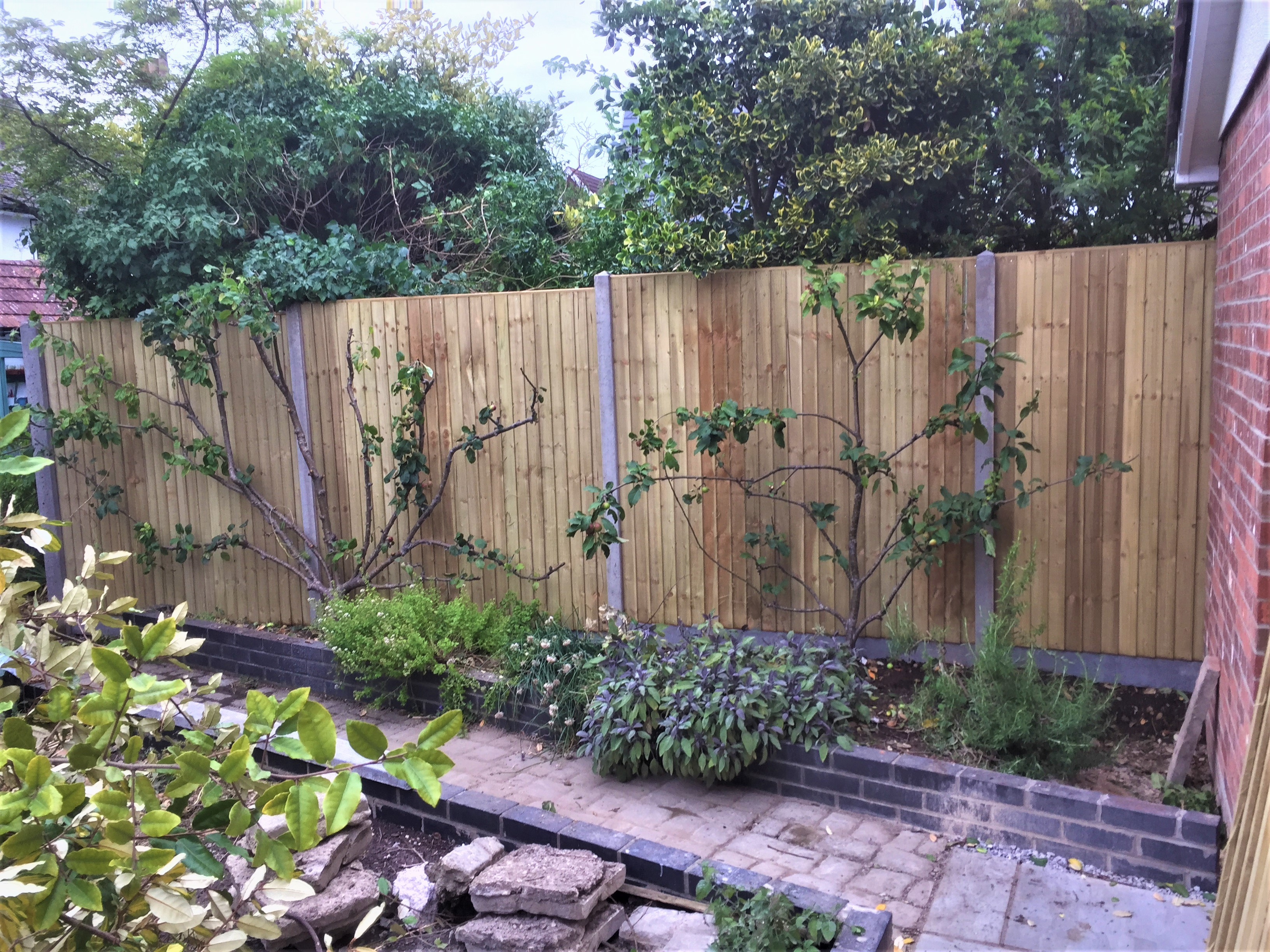 Fence panels and apple trees
